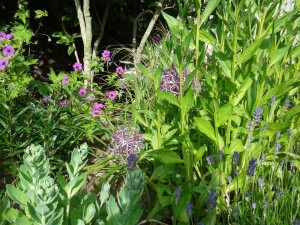 A bit of our garden