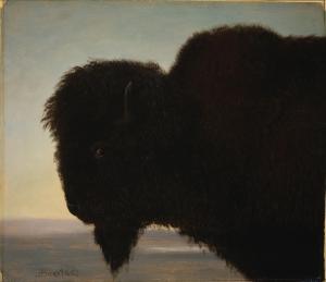 buffalohead